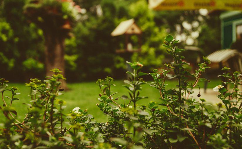 De zomer staat voor de deur, tijd voor de tuin