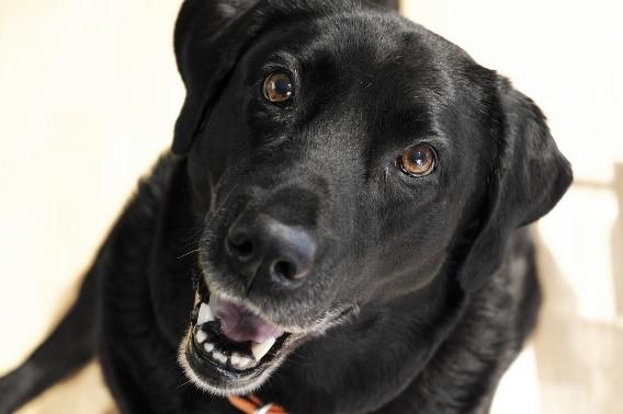 Manieren om jouw hond te laten lachen